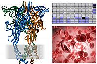 Identification of novel P2X1 ligands as therapeutic candidates for preventing thrombosis.