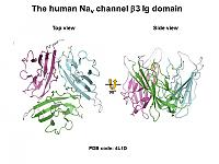 The predicted structure of the beta 3 extracellular domain