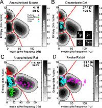 Identification of cell types based on spike firing in the cerebellum