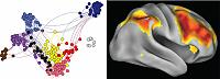 Functional networks in the aging brain
