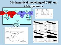 Mathematical model of CBF dynamics and CSF circulation