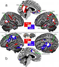 Shared neural circuits for mentalizing about the self and other.  a) Activation for mentalizing about self (red voxels) or other (blue voxels).  White voxels denote overlap for self- and other-mentalizing.  b) Common functional connectivity from shared vMPFC, PCC, and RTPJ seed regions.  Red voxels show connectivity for self-mentalizing and blue voxels are for other-mentalizing.  White voxels denote the overlap in connectivity for self- and other-mentalizing