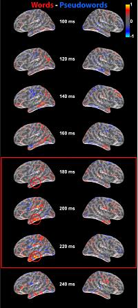 Brain activation in cortical motor areas in response to different types of action words as determined with fMRI