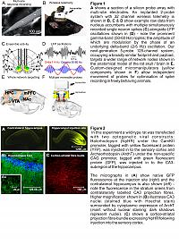Wireless multi-site electrophysiology and optogenetics in behaving rats.