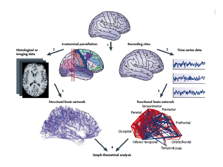 Professor ed bullmore cambridge neuroscience graph theoretical analysis of structural and functional netwiorks in human neuroimaging data bullmore sporns ccuart Images